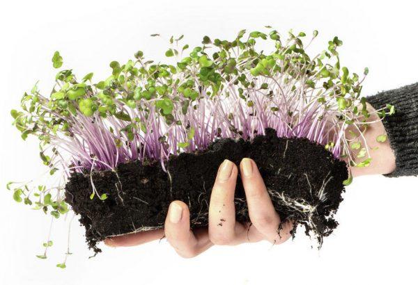 Проращивание в почве