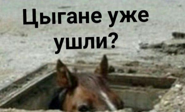 Без комментариев. Фото pikabu.ru