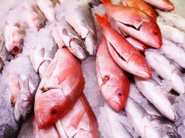 Красный луциан. Фото market-fish.ru