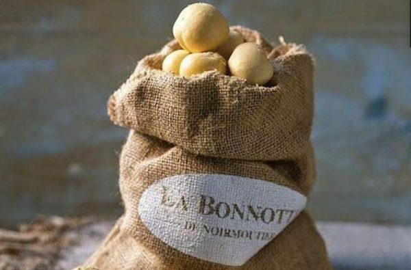 Катофель La Bonnotte. relax.com.