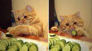 Они бывают! Коты-вегетарианцы — 17  правдивых фотоподтверждений