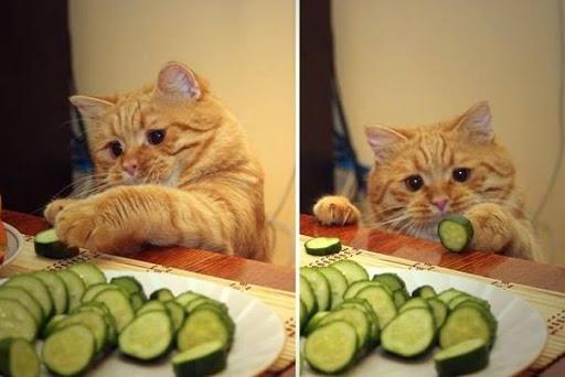 Они бывают! Коты-вегетарианцы - 17  правдивых фотоподтверждений
