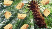 Что растёт на пальме или почему у нас нет сыра из настоящего молока, а один эрзац