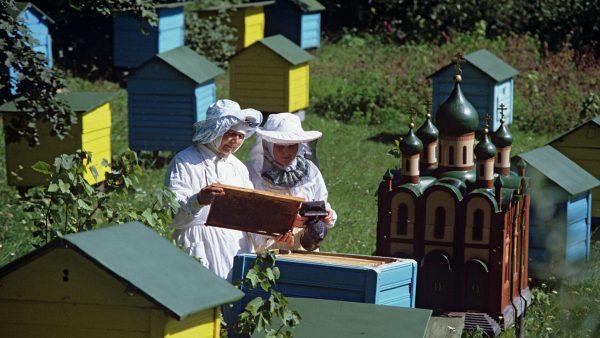 Пасека при православном Пюхтицком монастыре. Фото РИА Новости