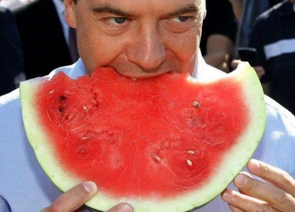 Дмитрий Медведев. Фото scandaly.ru