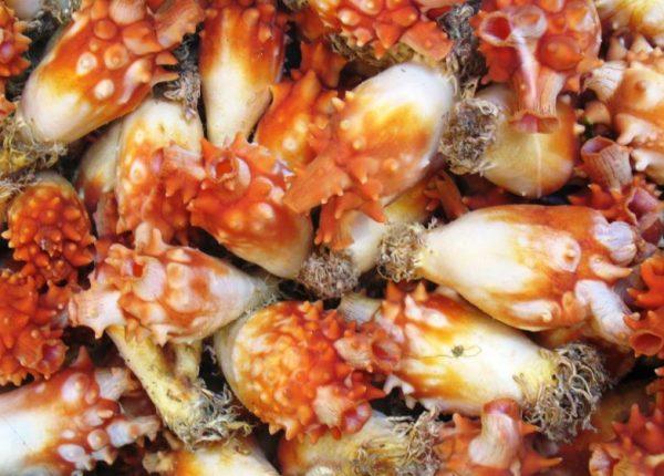 Эти блюда от горе-кулинаров не то что есть страшно, но и смотреть на них - 12 впечатляющих фото