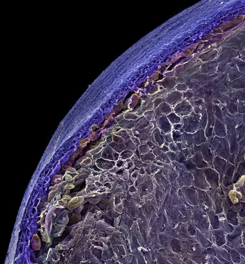 Как выглядят привычные продукты под микроскопом: потрясающие макрофото
